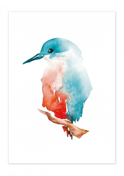 Animal Kingfisher Poster