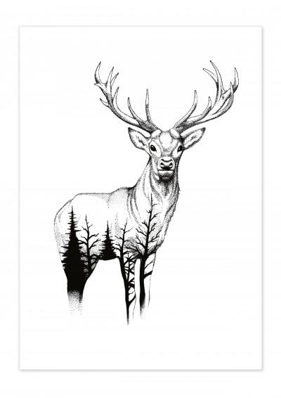 Animal Wild Life Deer Poster