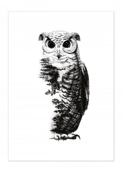 Animal Owl Poster