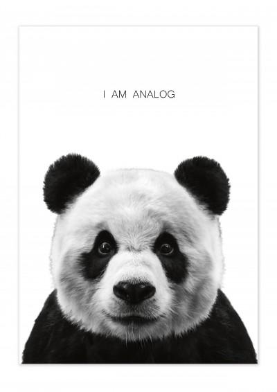 Animal Panda Poster