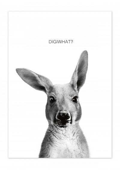 Animal Kangaroo Poster